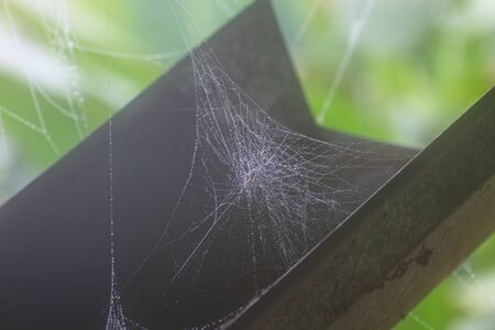 lightbeam: cobweb or spider web abstract background in nature Stock Photo