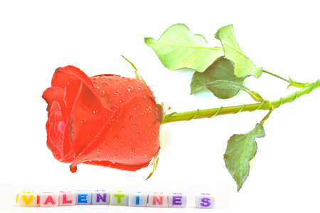 title emotions: rose with dice on white background - valentines, concept valentines day