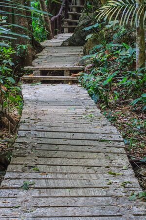 beautiful heaven: Bridge in the forest, nature trail in national park