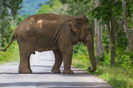 elephant on the road in park, Thailand Stock Photo