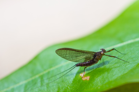 Insect on leaf in forest, beautiful wildlife in nature