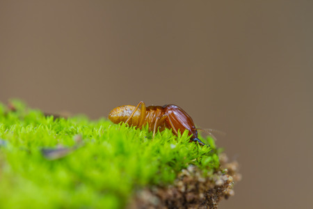 Close up termites or white ants destroyed on green moss in forest