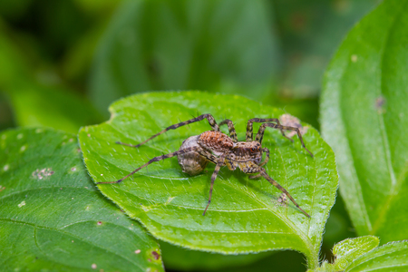 WEAVER: Close up spider in forest, abstract in nature background
