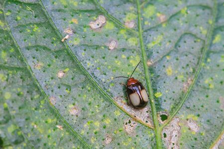 ladybug on leaf: Ladybug on a green leaf. Red bug on the grass Stock Photo