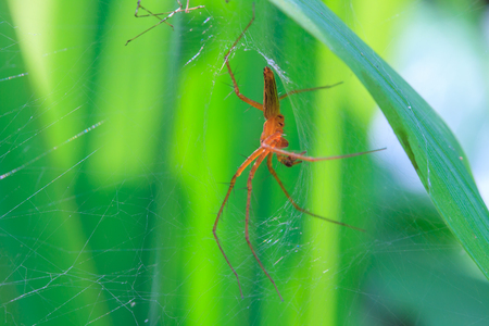 bruennichi: Close up spider in forest, abstract in nature background