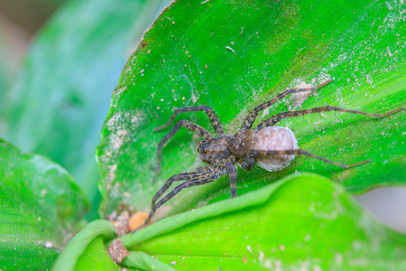 Close up spider in forest, abstract in nature background