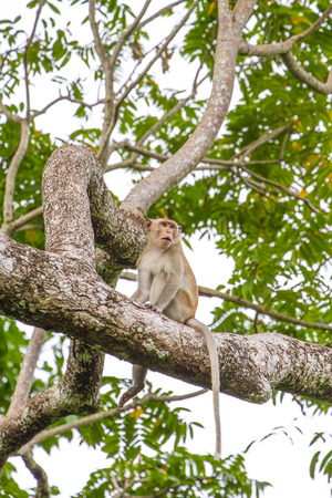Close up Monkey on tree in forest, Thailnd