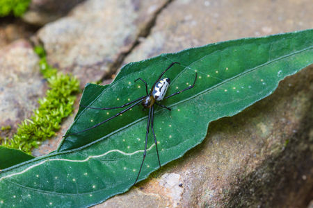 eight legs: spider on leaf in forest, abstract in nature background Stock Photo