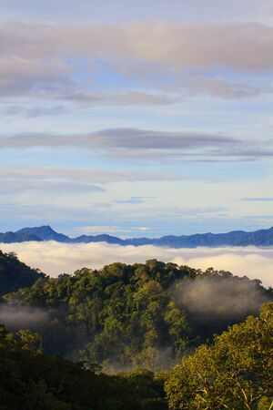national forests: sea of fog with forests as foreground. This place is in the Kaeng Krachan national park, Thailand
