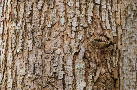 Tree bark texture, abstract background and texture
