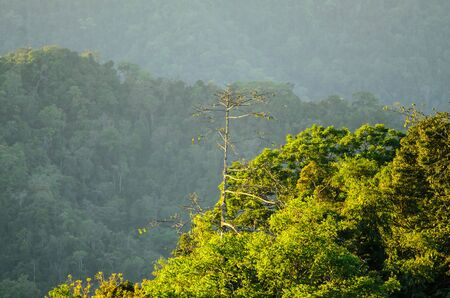 Green mountain forest landscape, abstract background from nature, Thailand Stock Photo