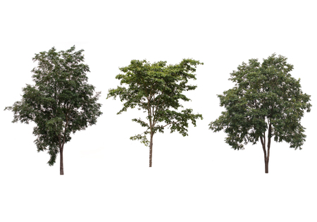 arboles frondosos: set of green trees isolated on white background Foto de archivo