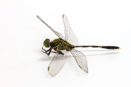 Closeup dragonfly isolated on a white background Stok Fotoğraf