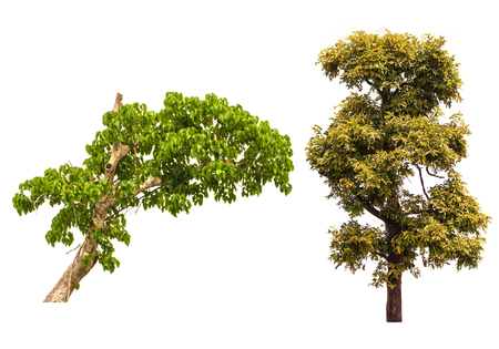 is green: set of green trees isolated on white background, used for background