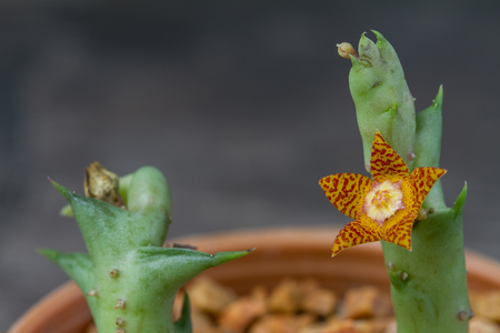 Close up of Cactus flower on background Stock Photo
