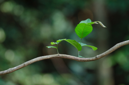 New leaf in forest background, nature abstract background