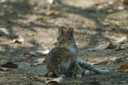 Cat in the garden, cute cat relaxing in the garden