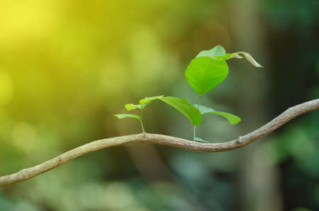 New leaf and sun ray, nature abstract background