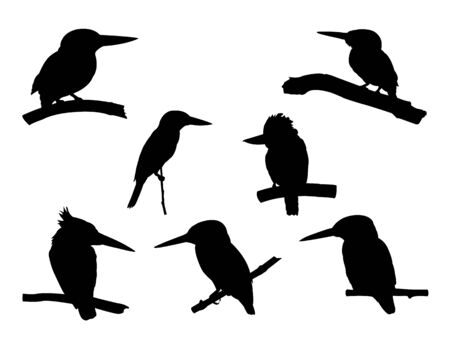 Collection of Kingfisher Bird on tree branch Silhouettes. Vector illustration isolated on white