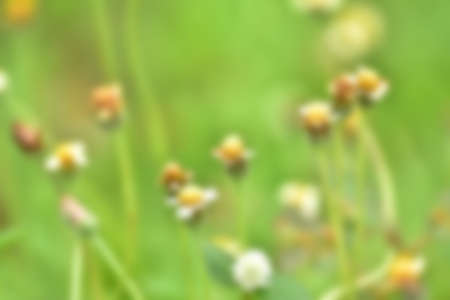Blurred of flowers background in nature. abstract blurred green background