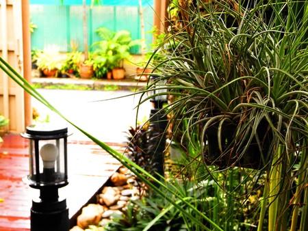 Small garden photo