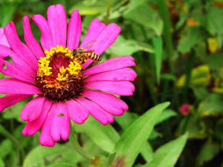 prerequisite: Beautiful  flowers