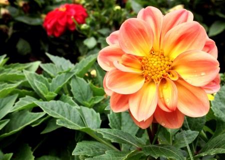 colour: Beautiful flowers