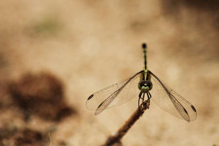 Close up beautiful Dragonfly