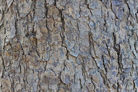 ironwood: Hardwood texture