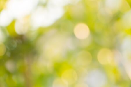tree shape': Defocus of  Nature bokeh, blurred background Stock Photo