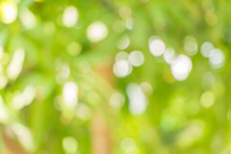 de focus: De focus of Nature bokeh, blurred background Stock Photo