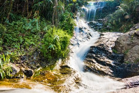 miracle leaf: Huay Kaew Waterfall, Chiang mai Province, Thailand. Stock Photo