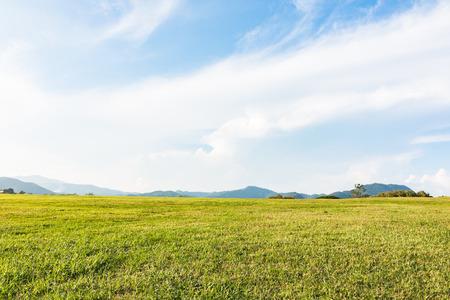 Groen veld en blauwe lucht met witte wolken Stockfoto