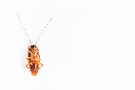nuisance: Cockroach on white paper background Stock Photo