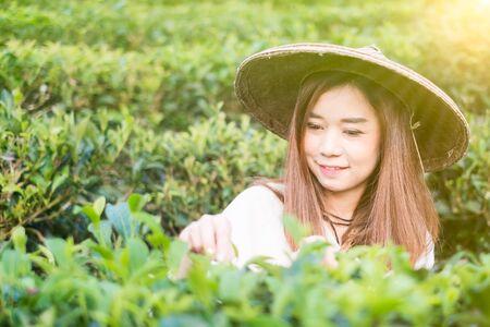 mea: Asian women Works In Green Tea Plantation , Mea hong son , Thailand Stock Photo