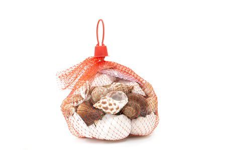 Sea shell in red net on white background