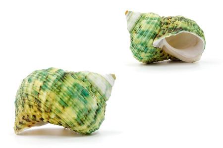 Sea shell on white background Stock Photo