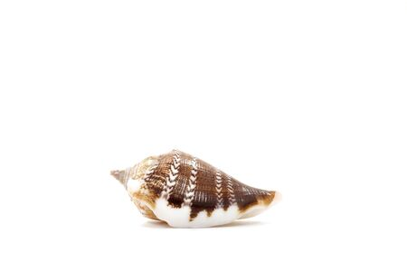 Sea shell isolate on white background