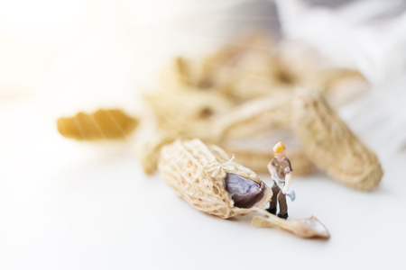 Miniature worker are working open boil peanut Stock Photo