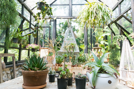 requiring: A greenhouse or glasshouse  is a structure in which plants requiring regulated climatic conditions are grown. Stock Photo