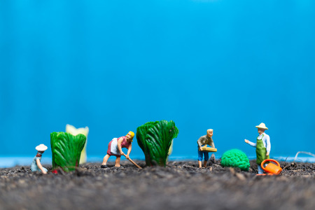 Miniature people , Gardeners Harvesting a vegetables , Agricultural concept Stock Photo
