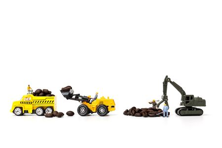 Miniature people working with roasted coffee beans on white background , Coffee time concept
