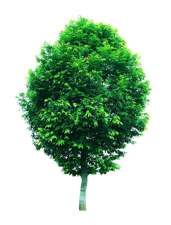 Trees isolated photo