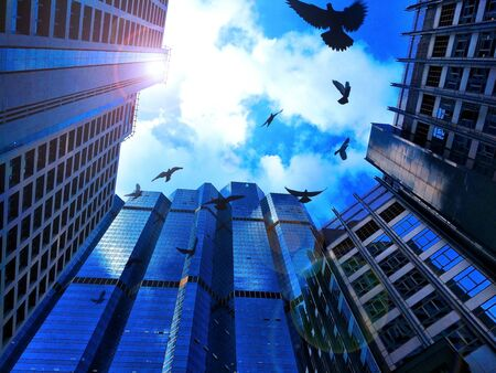 Low Angle View Bird Flying With Modern Architecture of Street Amidst Buildings Skyscraper In City,