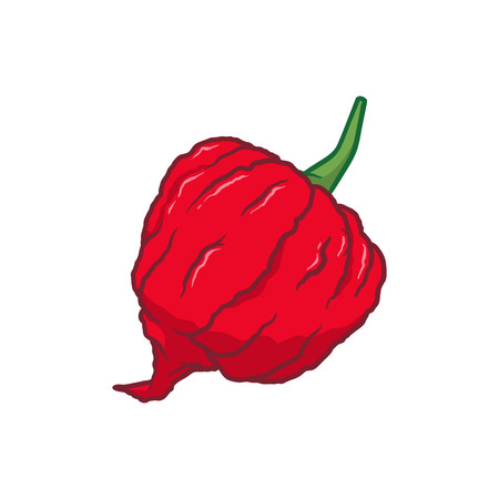 Carolina Reaper Chilli Pepper Vector Illustration