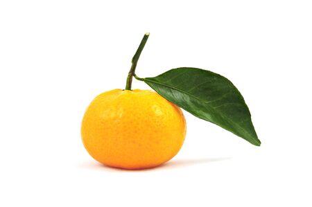 白地にマンダリン オレンジ 写真素材
