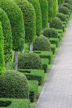 Garden with walking path photo