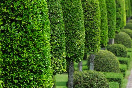thriving: Green Garden