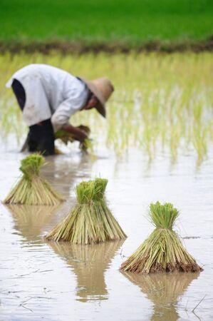 タイの農夫