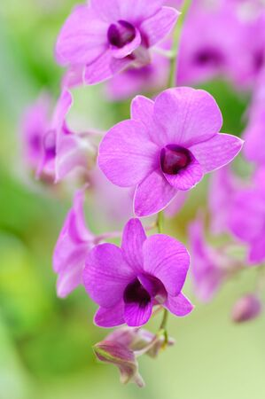 Beautiful Orchid photo